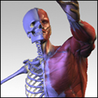 3D Virtual Human Anatomy Studio (PC) Discount Download Coupon Code