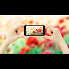 iPhone Photography Secrets (Mac & PC) Discount