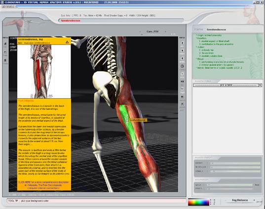 3d Virtual Human Anatomy Studio Art Technique Software For Pc